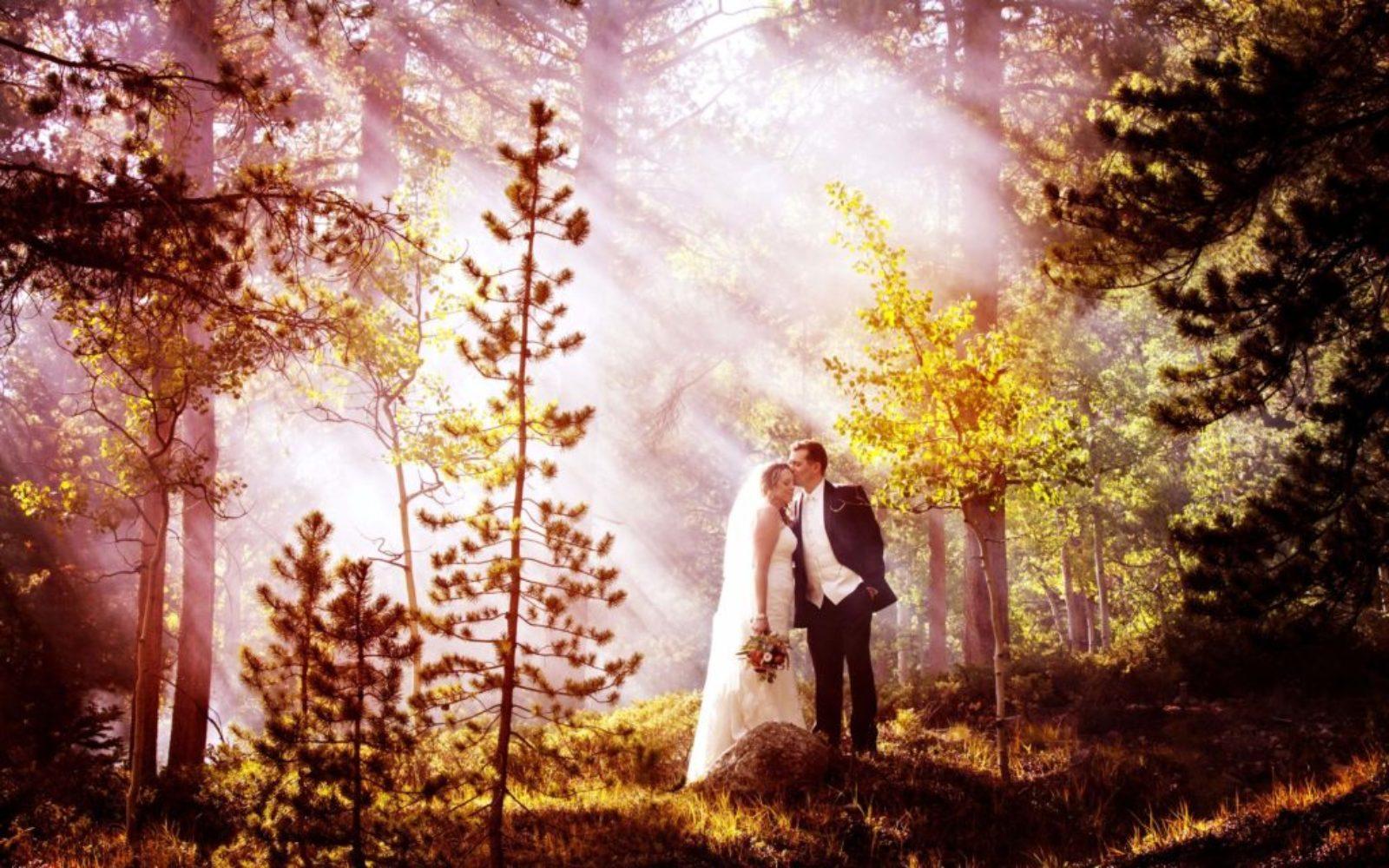 Majesty-Photo-Forest-Bride-groom-1024x640