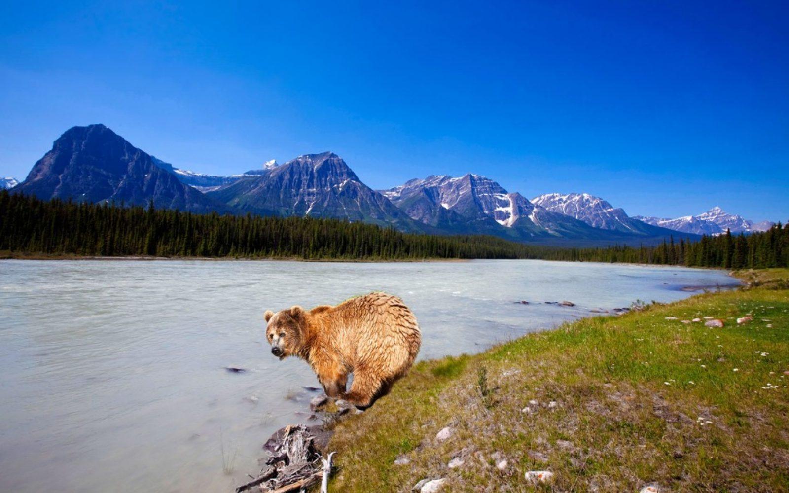 nature-bear-lake-1024x640