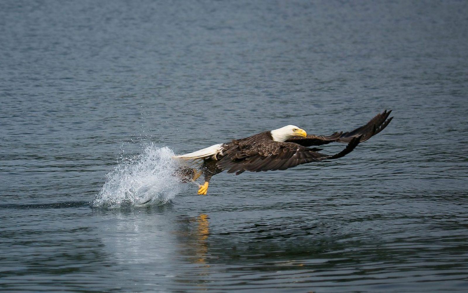 nature-eagle-fishing-1024x640