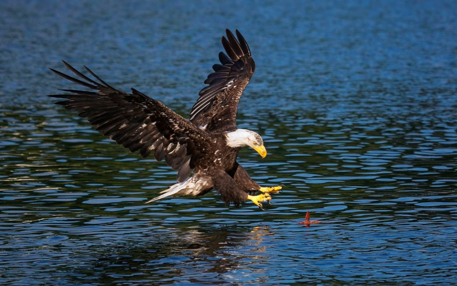 nature-eagle-swooping-1024x640