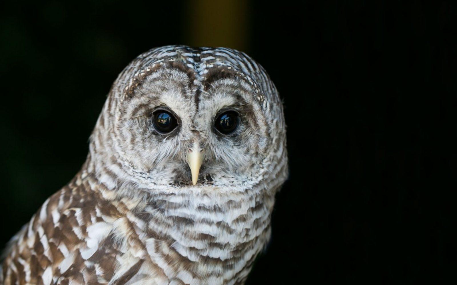 nature-owl-1024x640